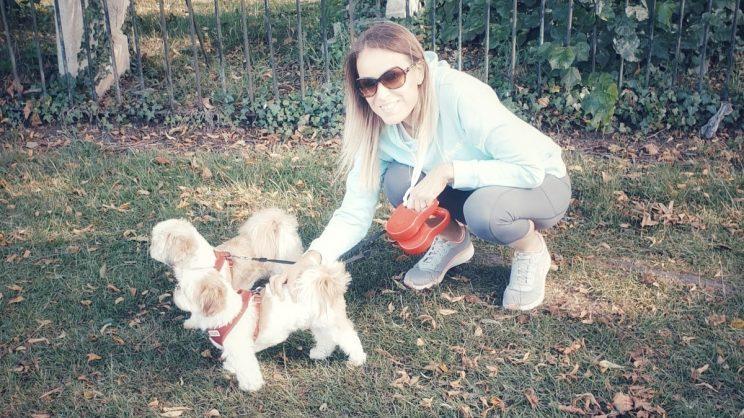 Dog walker with Shih Tzus