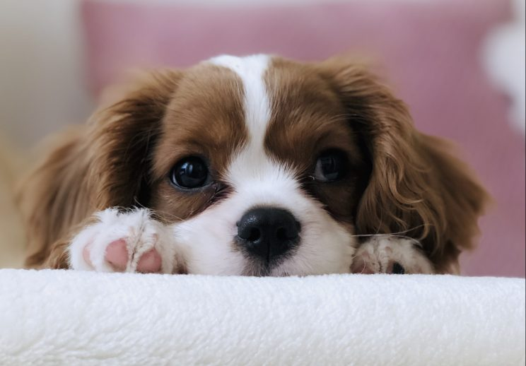Your puppy needs you! Why now is the perfect time to socialise your lockdown pup…